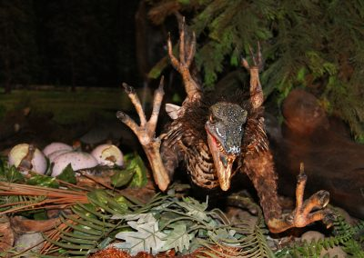 Rare Full Size Sinornithosaurus