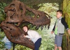Full Size T Rex Skull