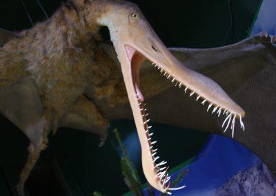 Life Size Dinosaurs