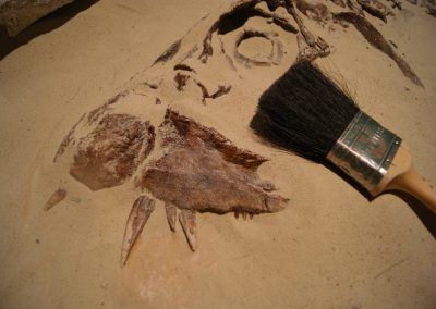 Fossil Excavation Areas