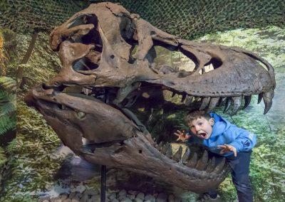 T Rex Fossil Skull